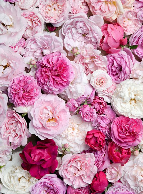 Фото обои с крупными цветами