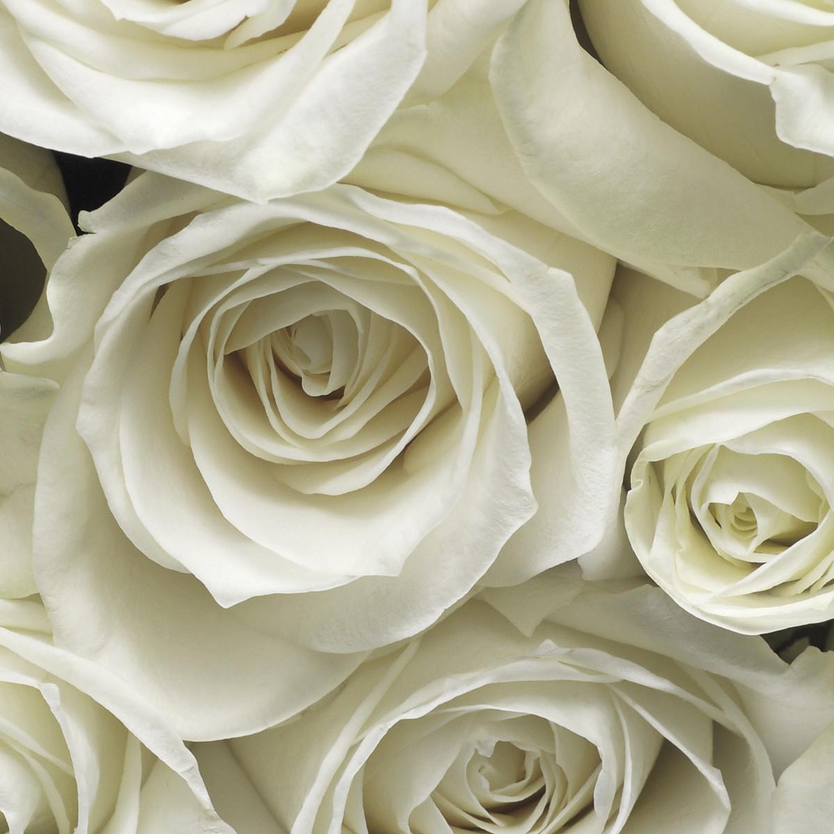 вот фотопанно розы фото задачу решает