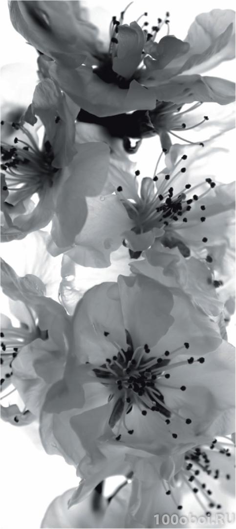 белые фотообои: