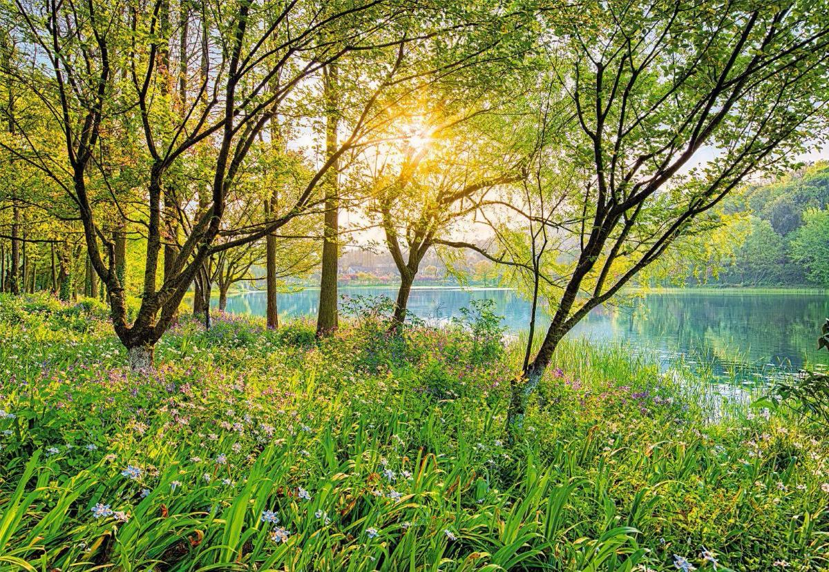 рака картинки красивые природа весна и лето после