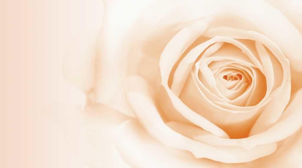 Картинки цветы белые бежевые