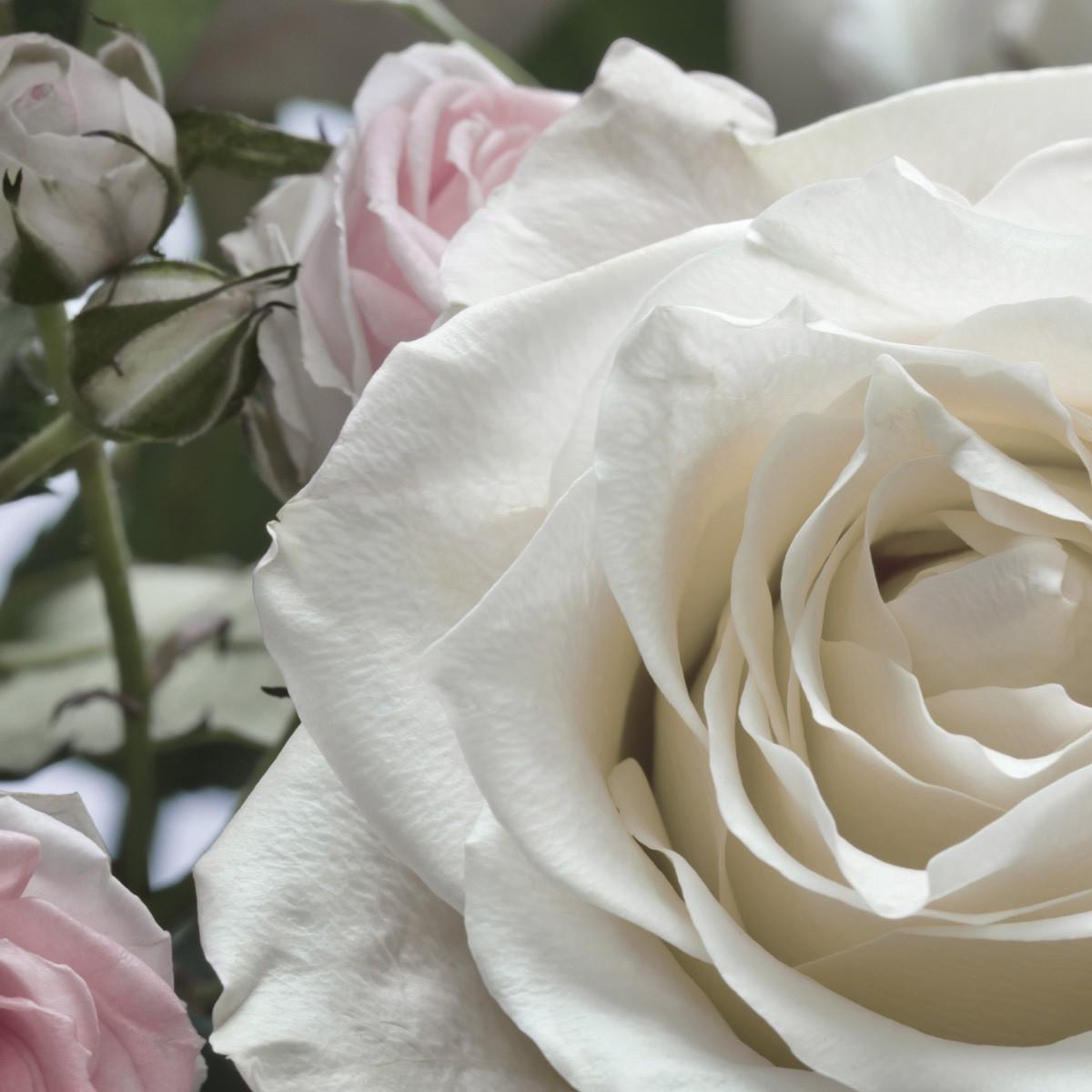 Обои цветы розы на стену