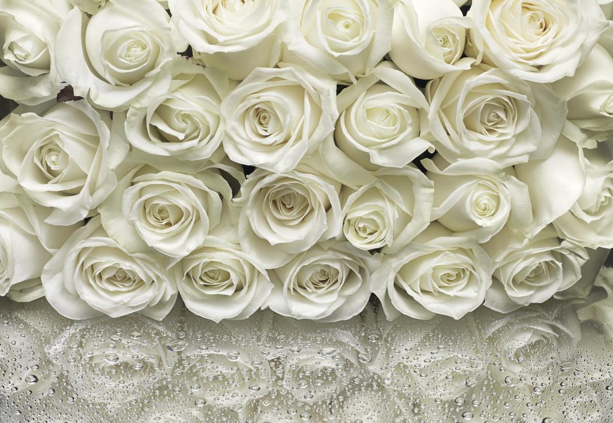 розы фотообои фото