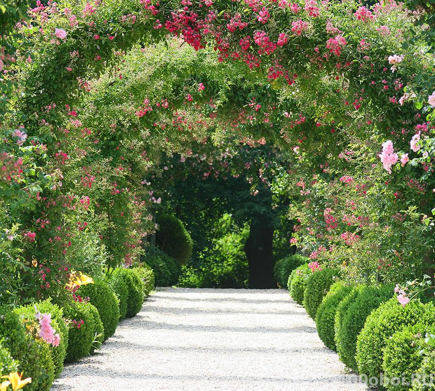 Дом цветы сад интернет магазин