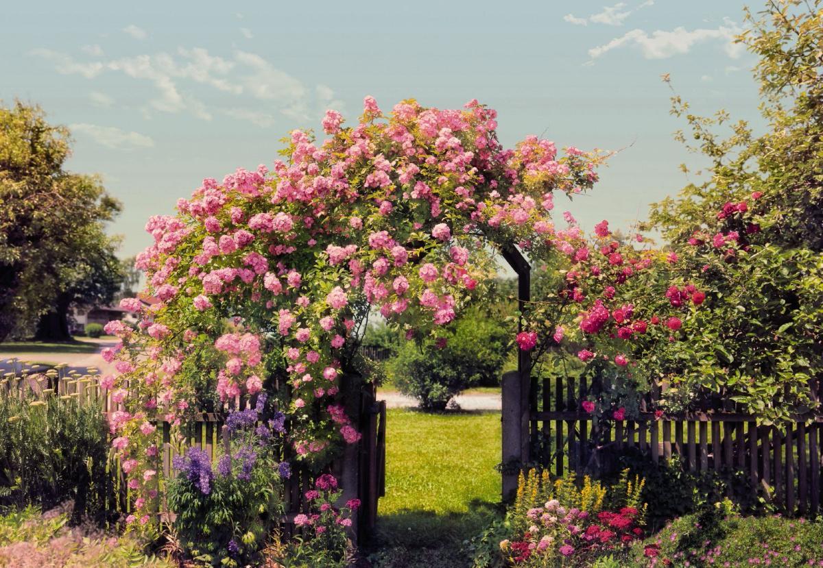 Фото цветы в саду