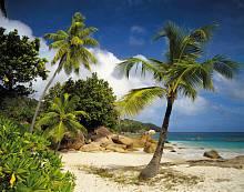 ФЛИЗЕЛИНОВЫЕ фотообои на стену «Пальмы, пляж, море» KOMAR 8NW-885 Praslin