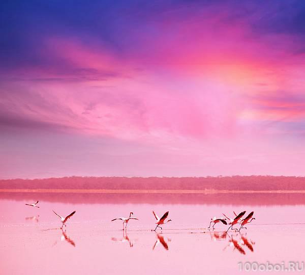 Фотообои на стену «Фламинго на закате ...: 100oboi.ru/catalog/fotooboi/fotooboi_divino_300x270_cm/fotooboi_na...