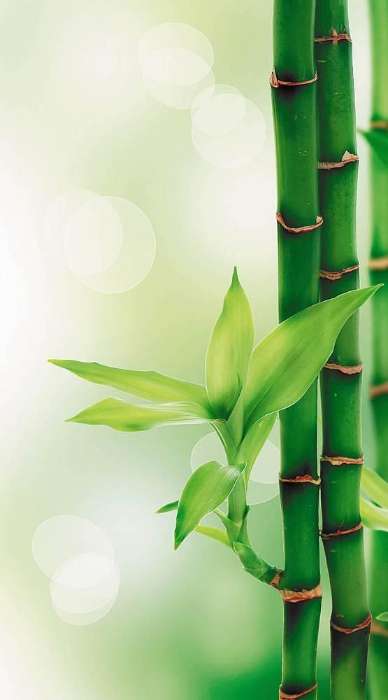 мой картинки бамбук для телефона нас