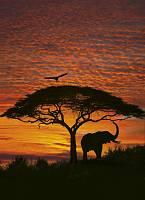 Фотообои на стену «Африканский закат» Komar 4-501 African Sunset