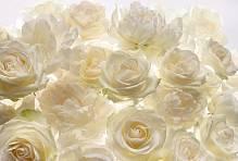 Флизелиновые фотообои «Белые розы» Komar XXL4-007 Shalimar